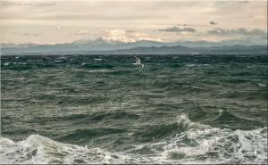 Pogled iz Strunjana na galeba, razburkano morje ter v ozadju Krn, Matajur Kanin in Pogorje Stola